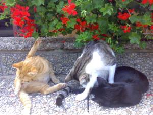 Katzen putzen sich