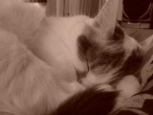 Dreifarbige Katzen sollen besonders aggressiv sein.