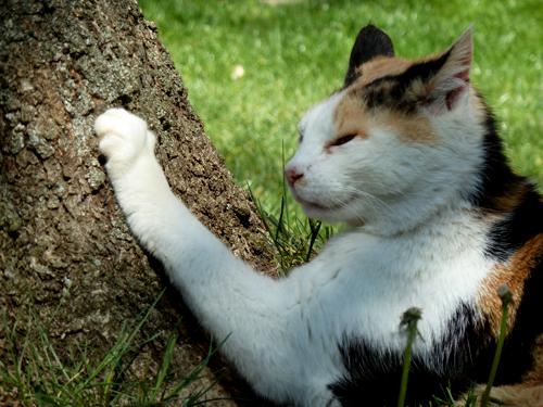 dreifarbige Katze Sandy