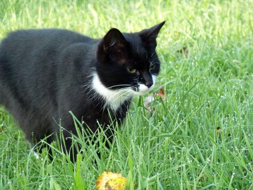 Schwarze Katze lauert