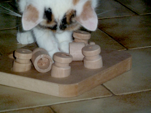 Intelligenzspielzeug Katze