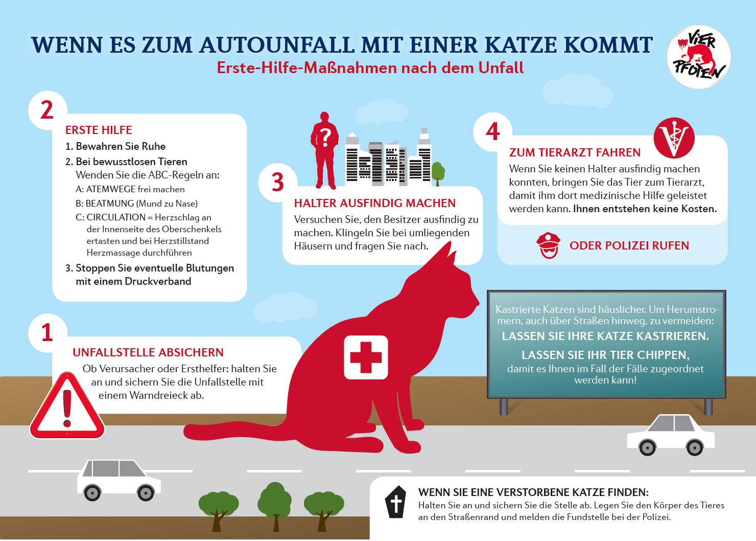 Katze angefahren: Erste Hilfe kann Leben retten * Haustiger
