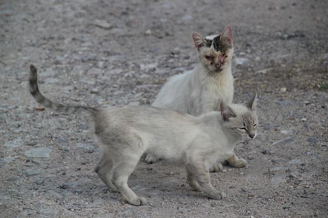 Streunerkatzen Kastrationsaktion