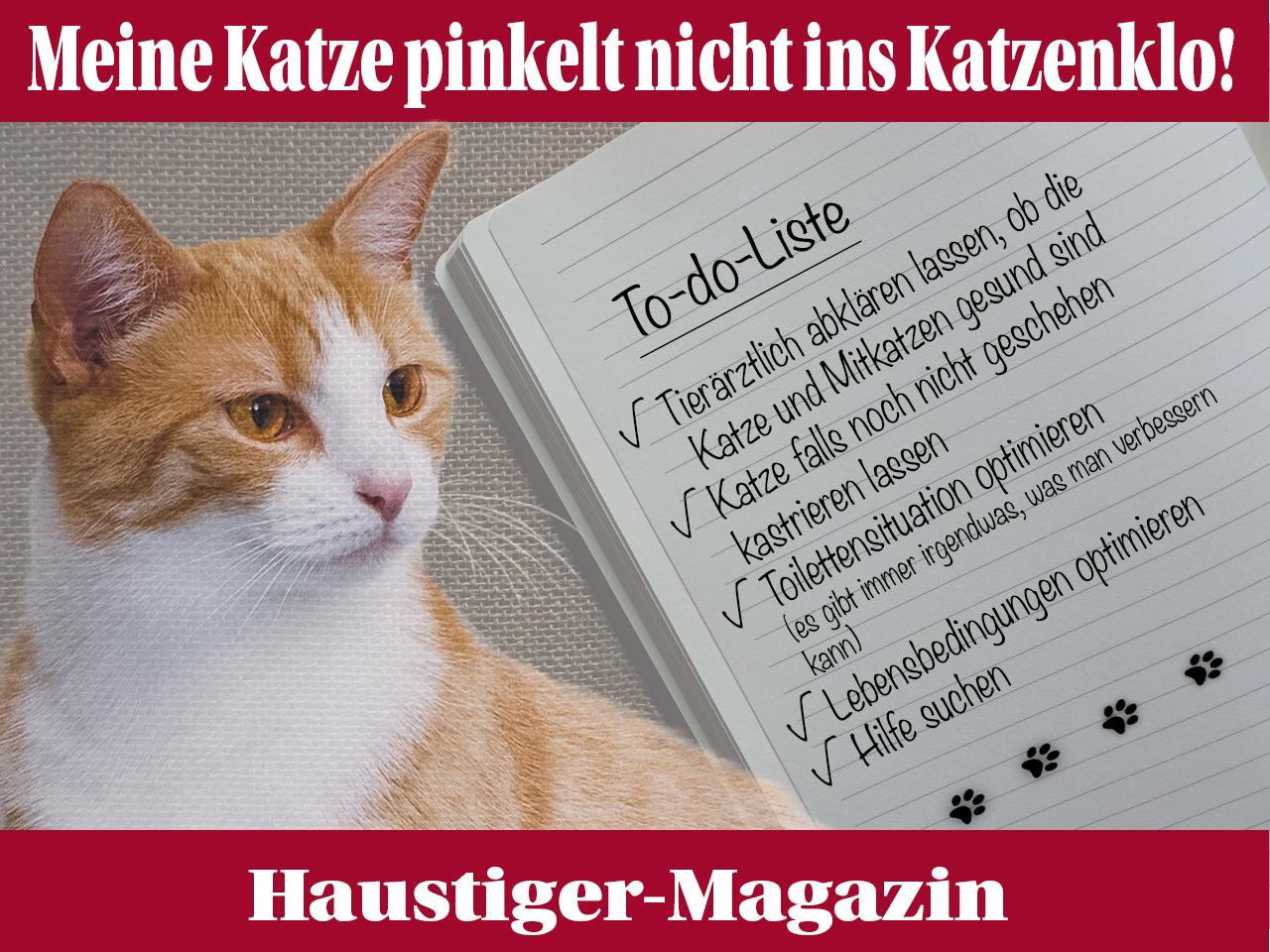 35 Gründe für Unsauberkeit bei Katzen und Lösungen - Haustiger