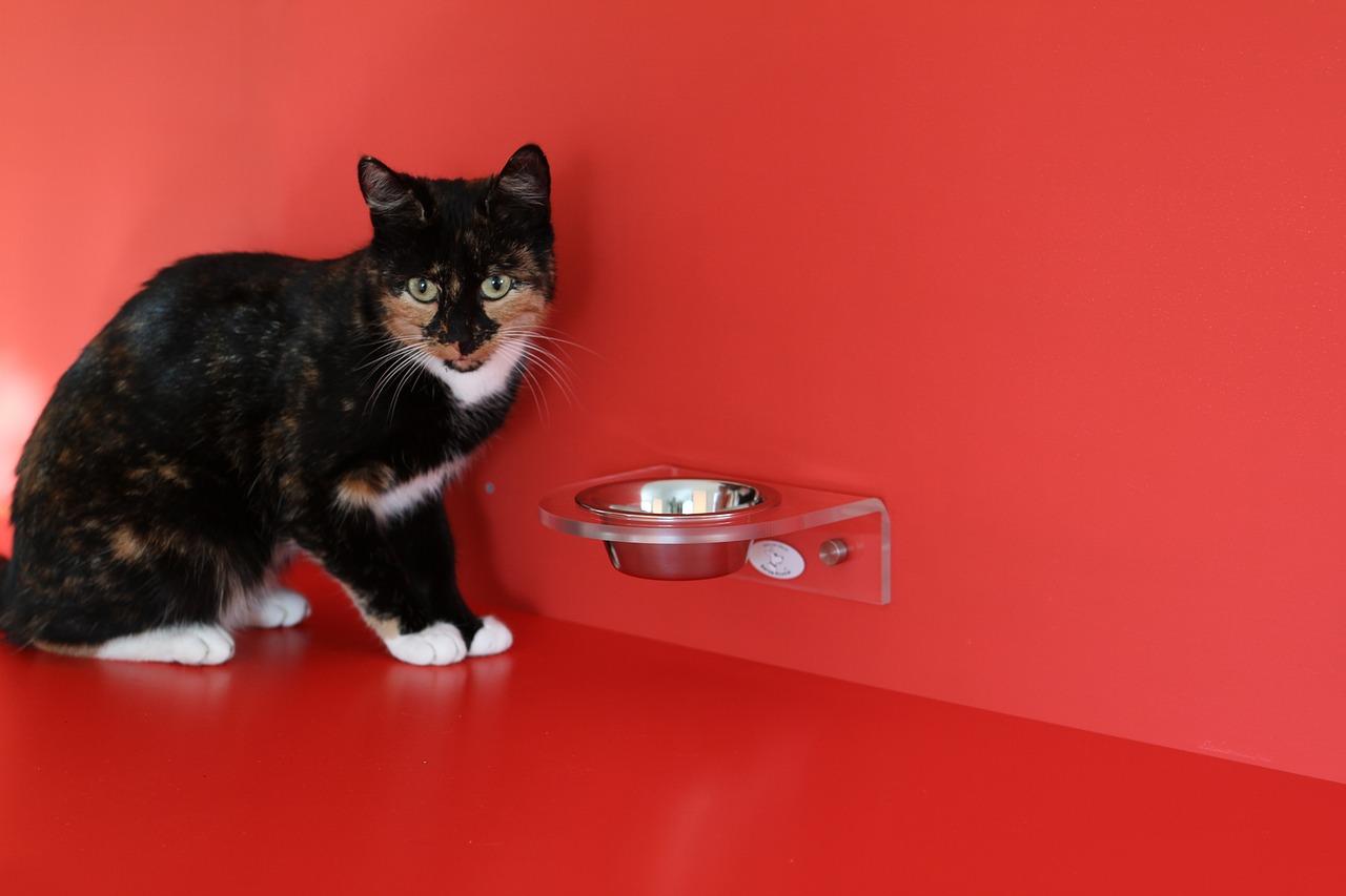 Die richtige Futtermenge für eure Katze bestimmen
