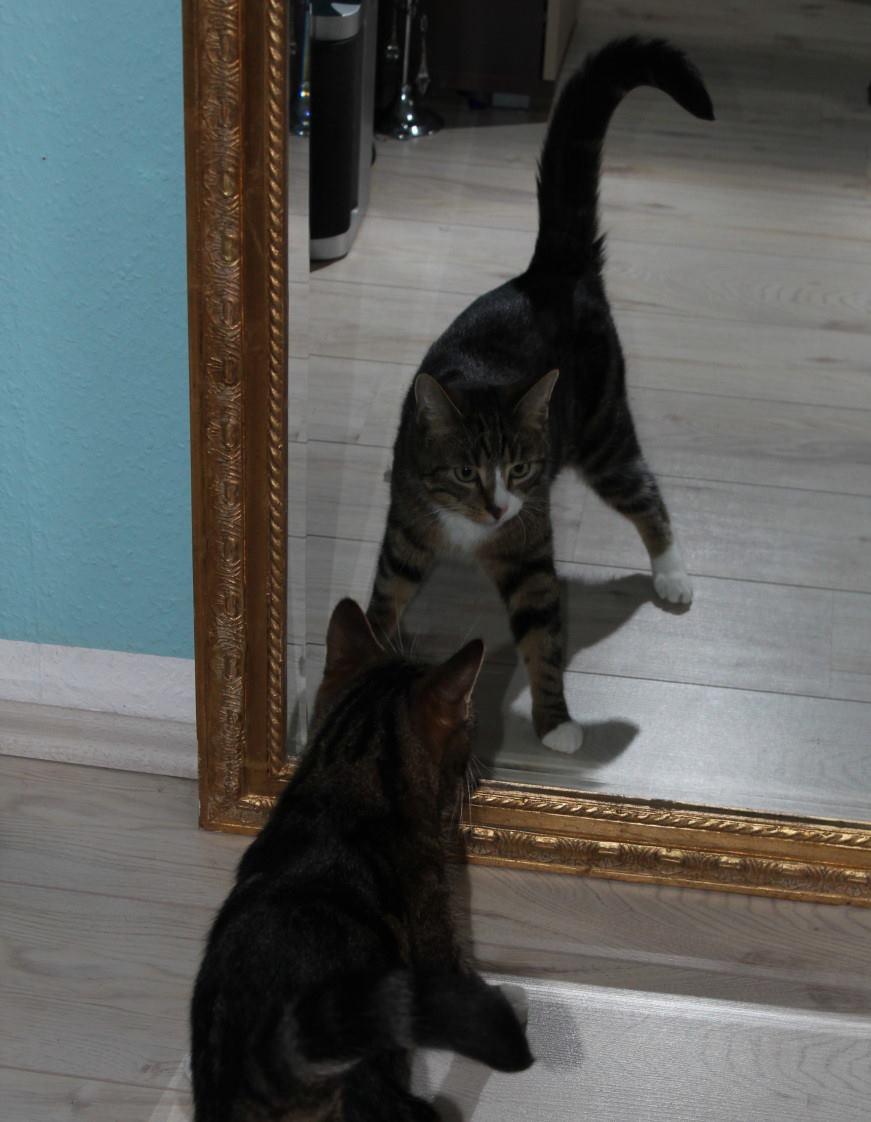 Jinpa am Spiegel