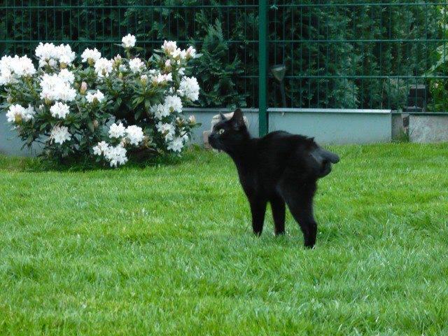 Lilli im Garten