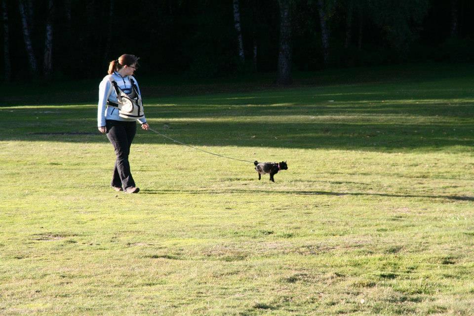 Lilli beim Spaziergang an der Leine