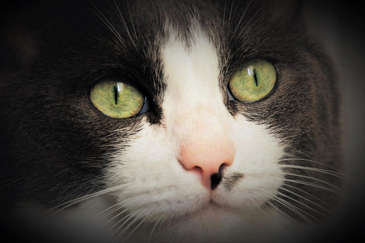 Katze zieht um