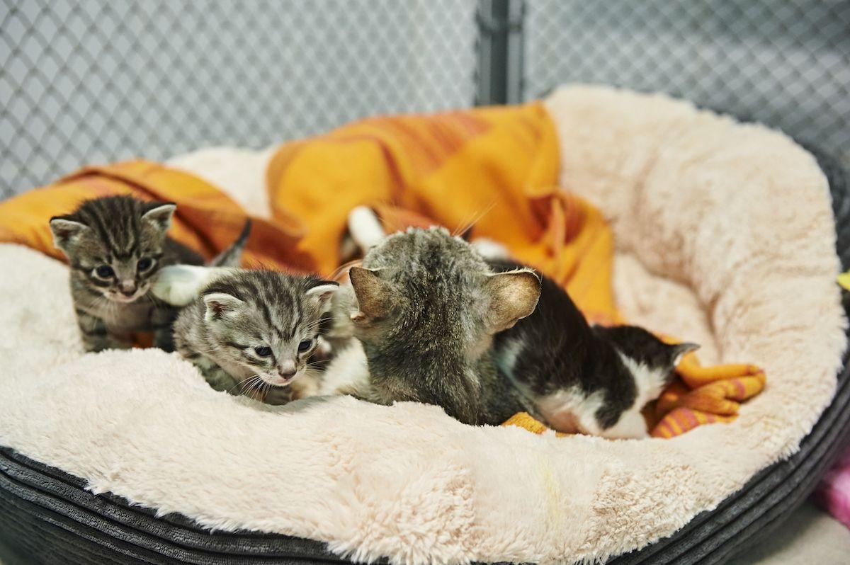 Katzenkinder in der SMEURA (@ Tierhilfe Hoffnung e. V.)