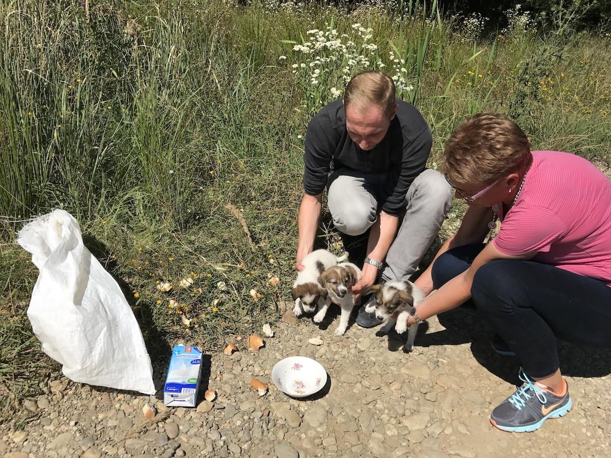 1. Vorsitzender Matthias Schmidt und Tierheimleiterin Ana-Maria Voicu mit gefundenen, ausgesetzten Welpen (© Tierhilfe Hoffnung e. V.)