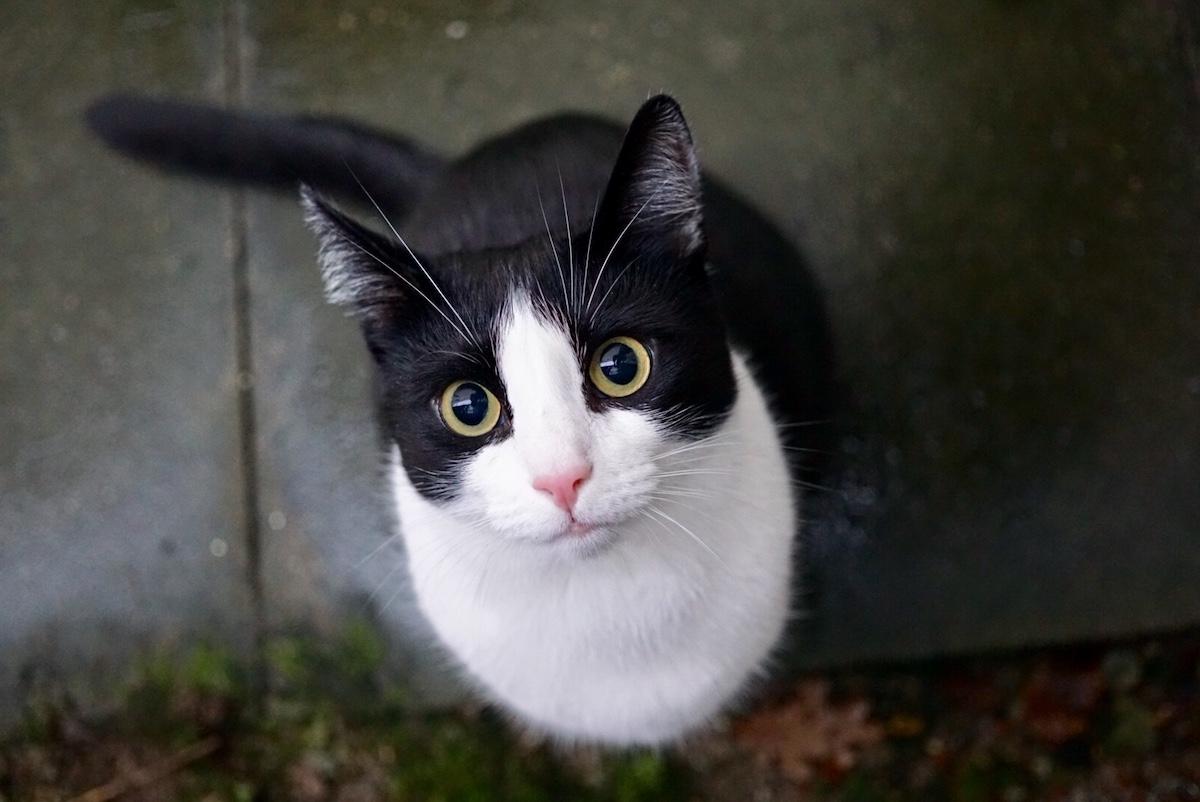 Momo von 2chaoscats