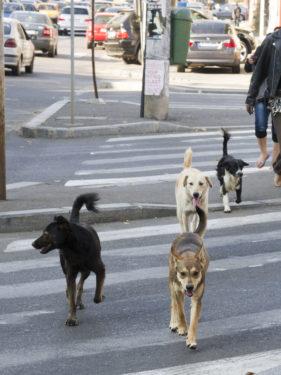 Straßenhunde in Pitesti (@Tierhilfe Hoffnung e. V.)