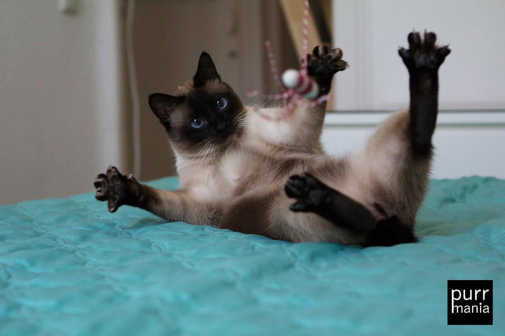 Aristoteles von Katzenspielzeugherstellerin Kerstin Benker