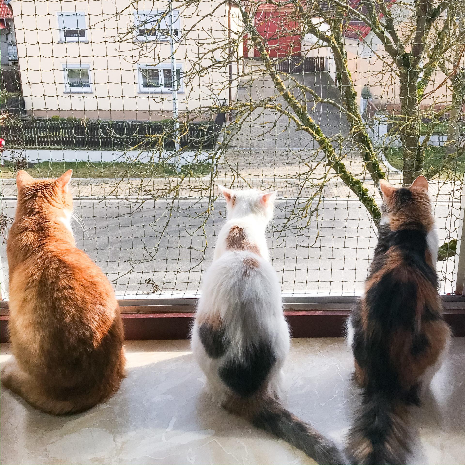 drei Katzen am Fenster