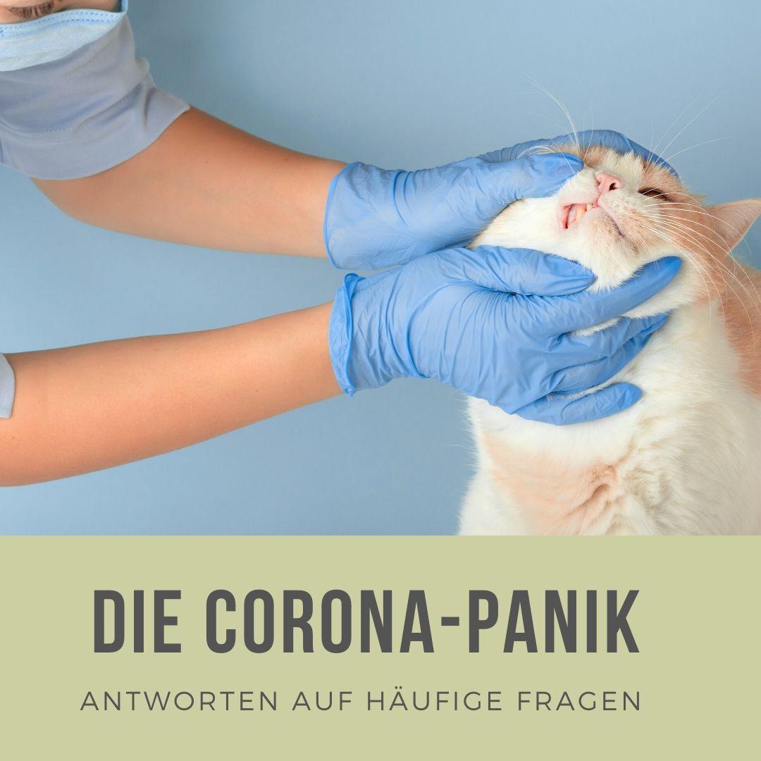 Coronaviren bei Katzen